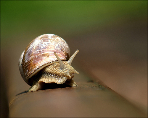 Snail on rail
