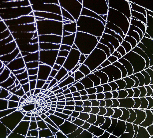 Frosty Morning Web