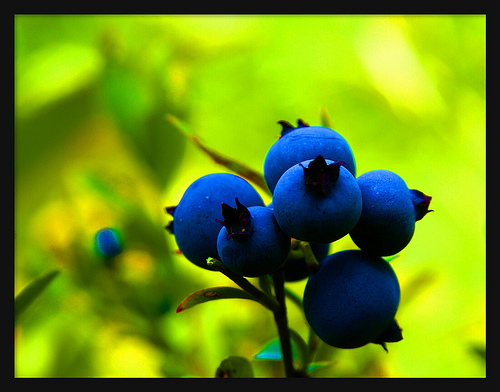 Blueberries by pfala