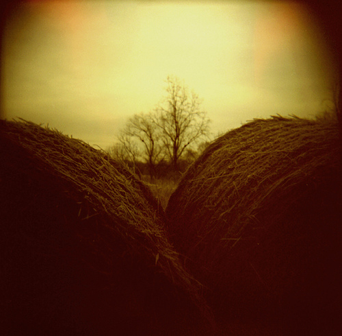 Bales by Matt Callow