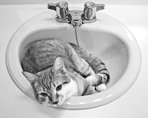 some cats love sinks by Kevin Steele