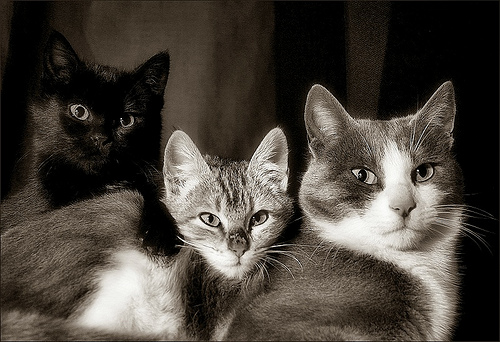 three cats by Ferran