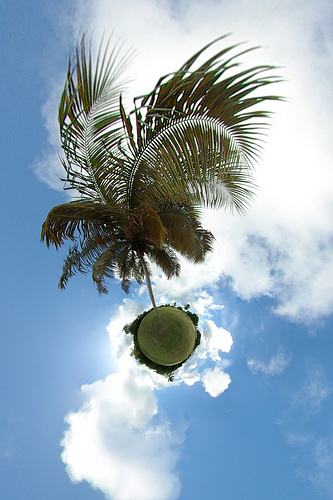 Palm Tree by gadl