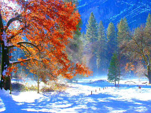 Yosemite Fall Colors in Winter by wbirt1