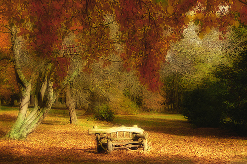 autumn seat by essjay