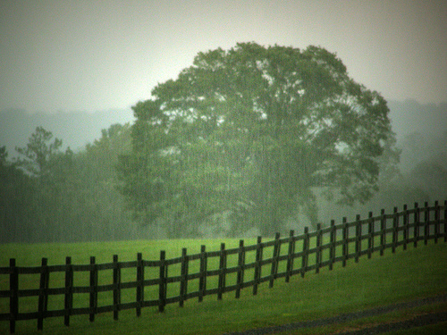 The Rain, the Fence, and the Tree by bbsc30