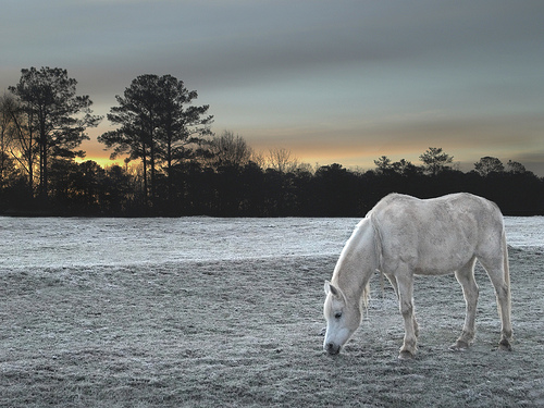 Horse at Serenbe Farms by Max Eremine