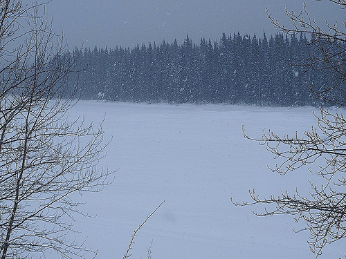 Snowstorm on the Liard