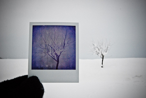 polaroid and photographed object