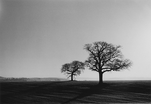 Two Trees in a Freshly Ploughed Field