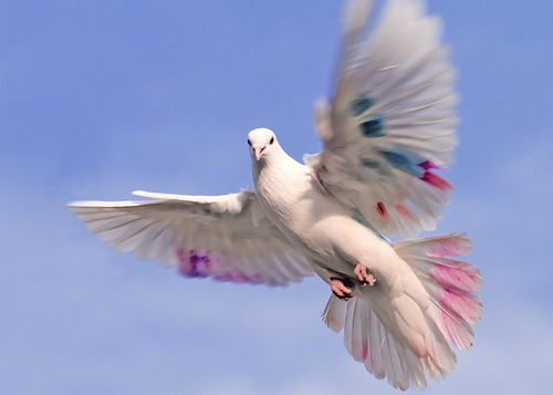 Beautiful white bird flying - photo#2
