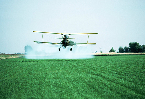 Crop dusting Rice Field