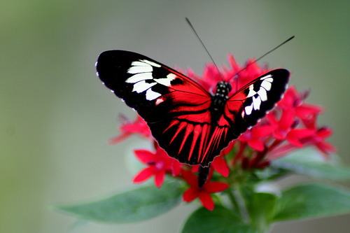 25 Beautiful Butterfly Pictures