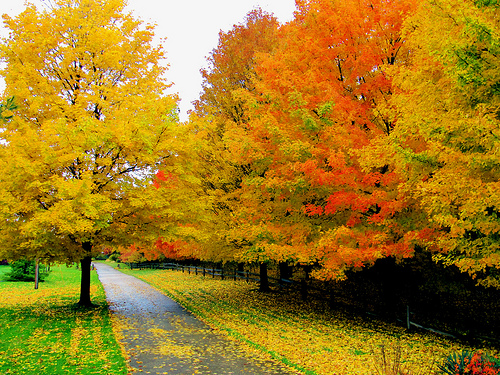 awesome bright autumn scenery - photo #25