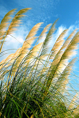 i will bend like a reed in the wind by doug wilson - 19 Awesome Reed Pictures