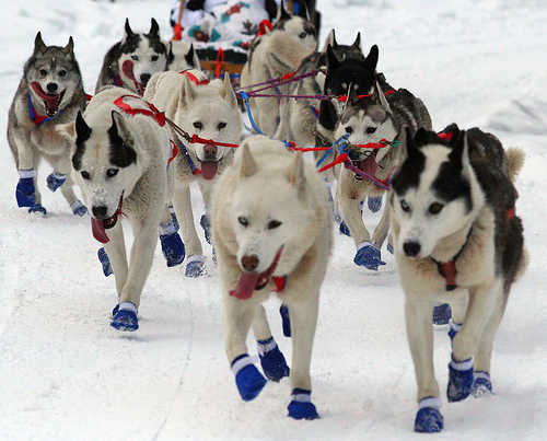 Where can I find information on dog sledding?