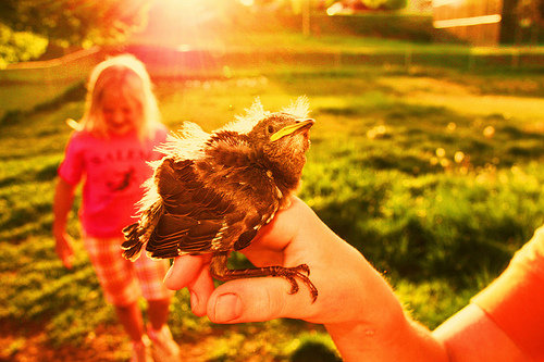 Children and Baby Bird