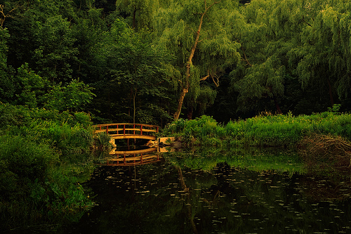Bridge and Forest Pond