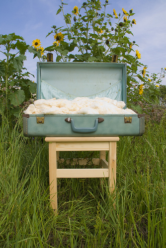 Suitcase of Cotton