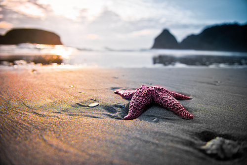 Starfish Watching the Sunset