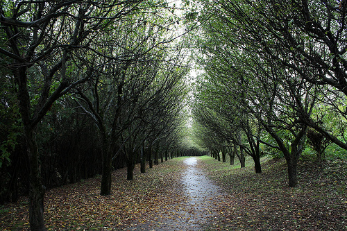 An apple alley
