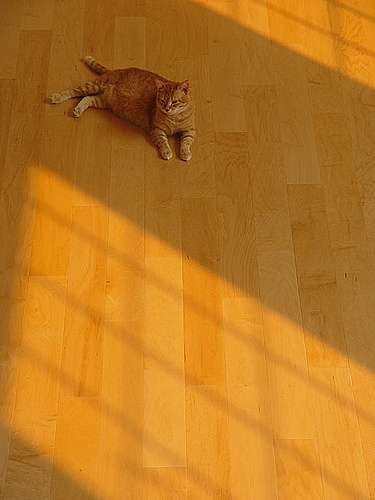 Orange Cat, Orange Light