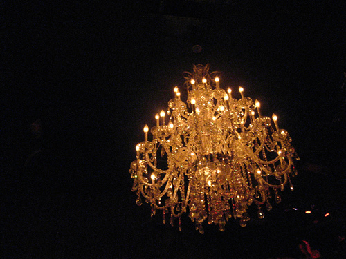Chandelier jellyfish