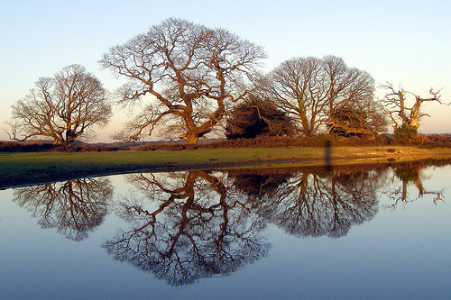 Winter oak reflections