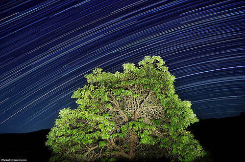 Star Trails Tree Light Painting