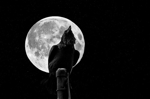 The Crow & The Moon [Explored]
