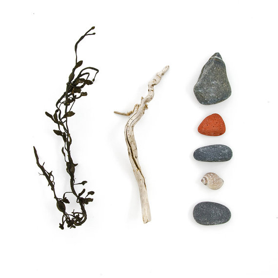 Beachcombing series No.31 seaweed stick rocks