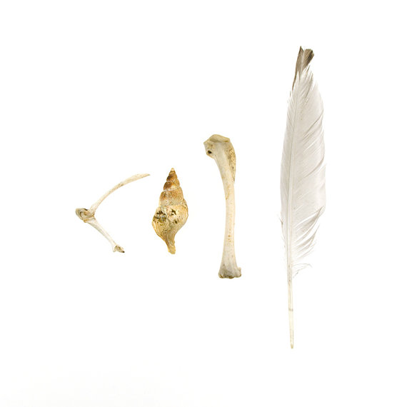 Beachcombing series No.41 shell bone feather