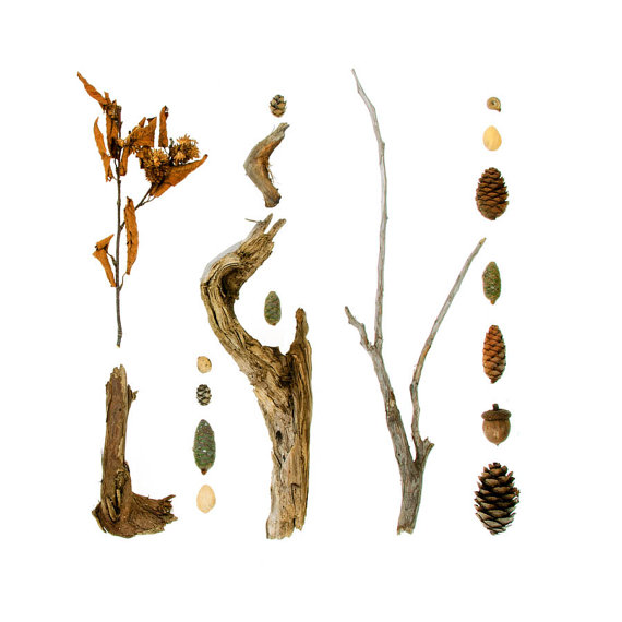 Beachcombing series No.52 pine cones and sticks