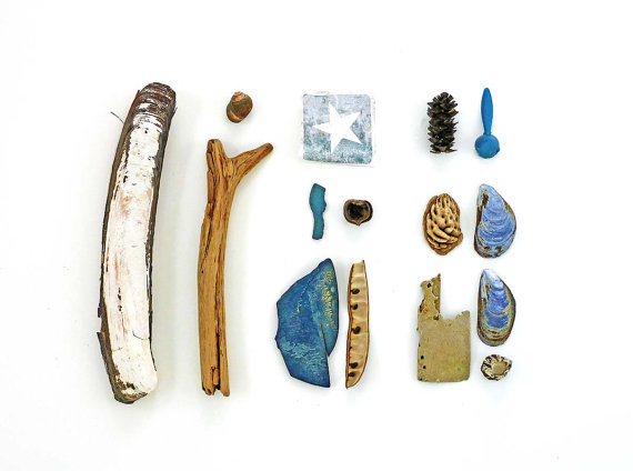Beachcombing series No.17, blue mussel shells, driftwood and other flotsam
