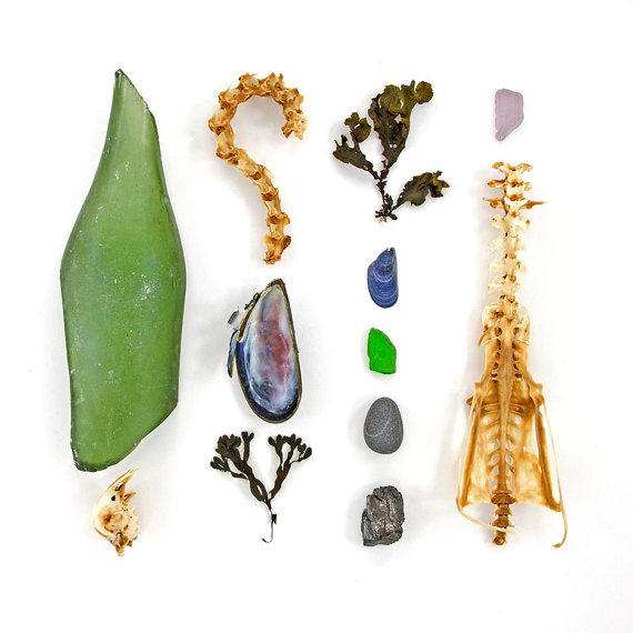 Beachcombing series No.33 - sea glass, mussel shell, seaweed, bones