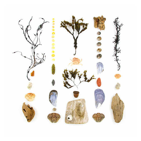 Beachcombing series No.38 seaweed and rocks