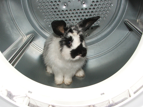 Rabbit in the Dryer