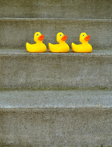 ducks on the stairs