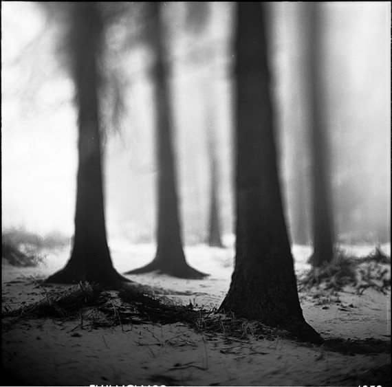 too far far away black and white forest