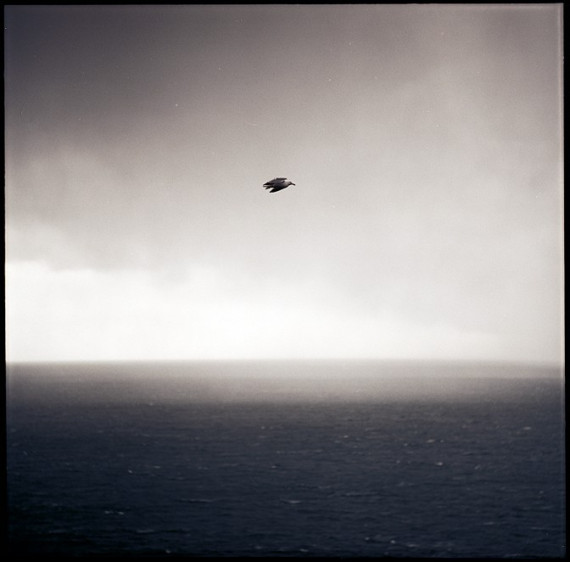 Hibernia IV. bird over ocean sky