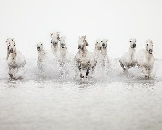 Wild white horses running in the water
