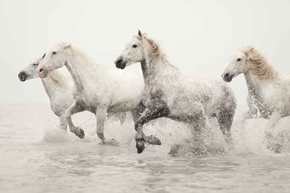 White Horses Running in Water
