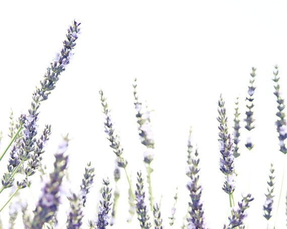 Lavender Provence Photography - South of France