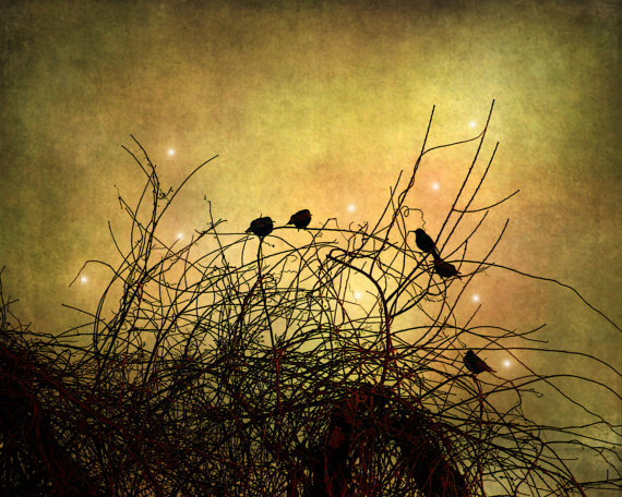 Birds Birds Birds fine art photography