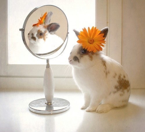 rabbit bunny looking in mirror