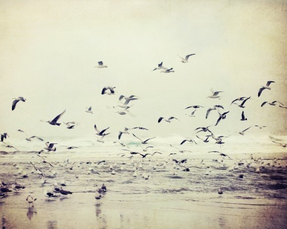 Flock of birds photograph - beach soft neutral gray birds earthtones seascape
