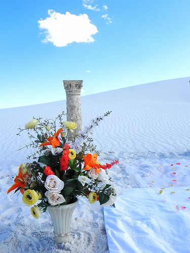Flowers and White Sand