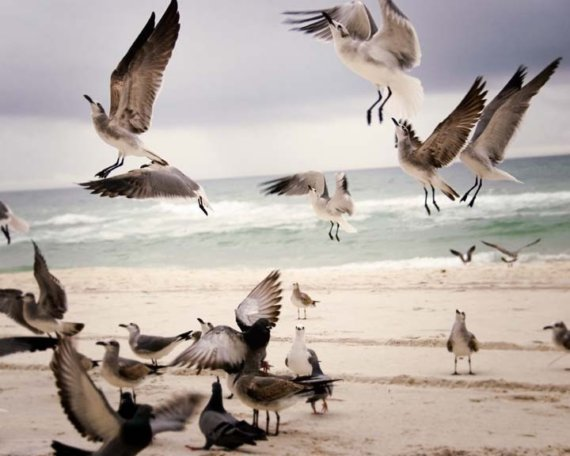 Seagulls on the beach