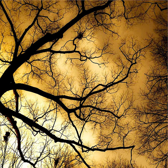 Winter tree yellow sky