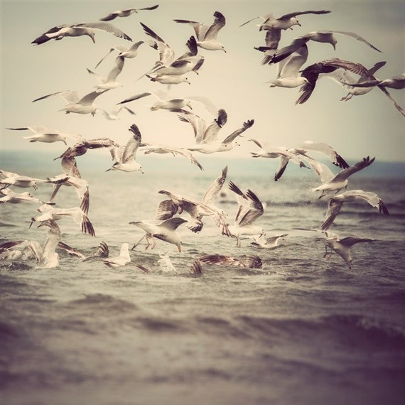 Seagulls in flight over water